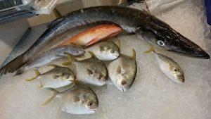 Salmon Fresh Fish 1