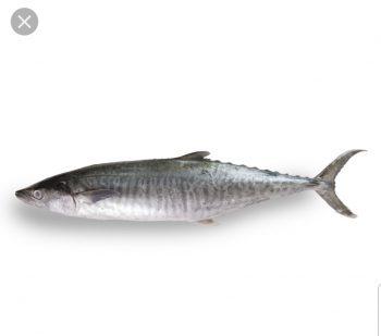 Batang 马鲛鱼
