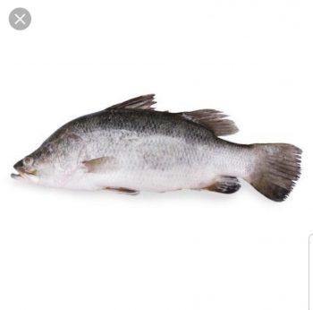 Seabass 金目鲈